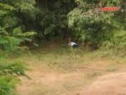 Video An ninh - Phát hiện xác người dưới hố sâu trong rừng cao su