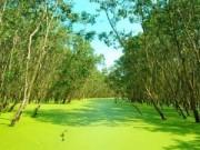 Du lịch - Rừng tràm Trà Sư, tấm thảm xanh dịu mát miền Tây