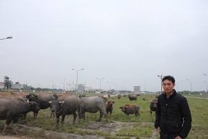 Bạn trẻ - Cuộc sống - 8x sở hữu đàn trâu trị giá tiền tỷ ở Hà Nội
