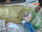 Video An ninh - Bắt xe chở gần 500kg bì, mỡ lợn thối ở Hưng Yên