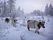 Điểm du lịch - Mùa đông khắc nghiệt ở ngôi làng lạnh giá nhất thế giới