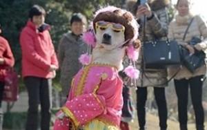 Phi thường - kỳ quặc - Chó điệu đà dạo phố bằng hai chân