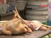 """Thị trường - Tiêu dùng - Rợn người công nghệ """"nhồi"""" hóa chất nhuộm vải vào vật nuôi"""
