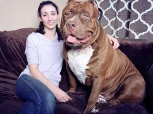 """Phi thường - kỳ quặc - 5 chú chó to lớn khiến con người """"bái phục"""""""