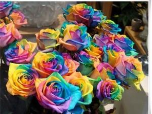 """Bạn trẻ - Cuộc sống - Những loại hoa hồng khiến mọi phụ nữ ''thèm muốn"""""""