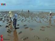 Du lịch - Về biển Thụy Xuân bắt ốc móng tay