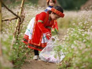 Bạn trẻ - Cuộc sống - Bé gái Hà thành bảo vệ hoa tam giác mạch