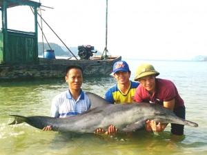 Tin tức trong ngày - 3 ngư dân bế cá heo mắc cạn thả về biển khơi
