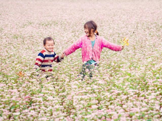 Khám phá những vùng hoa tam giác mạch đẹp nhất Việt Nam