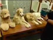 """Bạn trẻ - Cuộc sống - Clip: 4 chú chó đáng yêu """"cầu nguyện"""" trước khi ăn"""