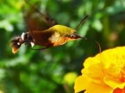Phi thường - kỳ quặc - Phát hiện loài côn trùng cực hiếm ở Trung Quốc