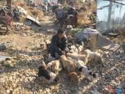 Thế giới - TQ: Ông lão vô gia cư sống cùng 40 chú chó hoang