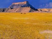 Du lịch - Hàng triệu bông hoa sống dậy ở sa mạc khô cằn nhất TG