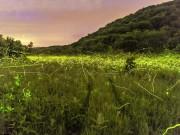 Chuyện lạ - Ngoạn mục: Cảnh đom đóm sáng rực bầu trời đêm