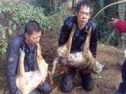Thế giới - TQ: Trộm chó bị bắt quỳ gối, đeo xác chó trên cổ