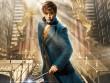 """Fan Harry Potter """"đứng ngồi không yên"""" vì phần phim mới"""