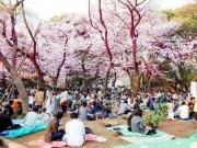 """Du lịch - 4 điều luật gây """"sốc"""" cho khách du lịch Nhật Bản"""