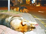 Thế giới - Chú chó suốt đêm bảo vệ xác bạn bị xe cán chết