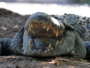 Thế giới - Indonesia dùng cá sấu canh giữ nhà tù