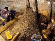 Phi thường - kỳ quặc - Phát hiện 10 tấn tiền xu trong ngôi mộ 2.000 năm tuổi