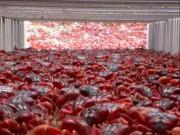"""Thế giới - Ảnh: 50 triệu chú cua đỏ """"hành quân"""" dày đặc trên đường"""