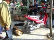 """Tin tức trong ngày - Nhà chùa cảnh báo, công an """"mai phục"""" kẻ trộm chó mèo"""