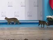 """Thế giới - Video 3 chú mèo """"cướp"""" sân khấu hội nghị thượng đỉnh G20"""