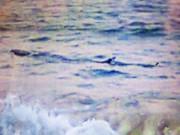 """Tin tức trong ngày - Ngư dân """"nhận dạng"""" cá lạ khổng lồ bơi dọc biển Tuy Hòa"""