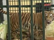 """Video An ninh - Động vật hoang dã """"chờ chết"""" trong trung tâm cứu hộ"""