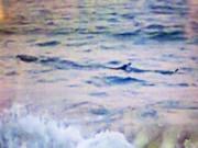 Tin tức trong ngày - Vụ cá lạ khổng lồ ở biển Tuy Hoà: Tạm tháo biển cảnh báo