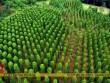 Khám phá vườn tiêu ở đảo Phú Quốc