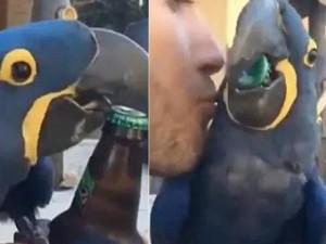 Phi thường - kỳ quặc - Video: Vẹt dùng mỏ mở nắp chai bia điệu nghệ