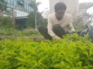 Tin tức Việt Nam - HN: Người dân trồng... cây cảnh dưới đường sắt trên cao