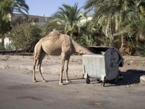 """Điểm nóng - Hậu máy bay Nga rơi, du lịch Ai Cập """"lãnh đủ"""""""