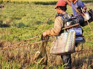 Tin tức trong ngày - Theo chân thợ săn chuột đồng ở Sài Gòn