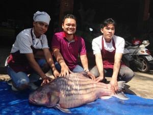 Tin tức Việt Nam - Bắt được cá trà sóc khổng lồ trên dòng Mê Kông