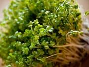 """Sức khỏe đời sống - 7 thực phẩm """"thần kỳ"""" có thể chống lại ung thư dạ dày"""