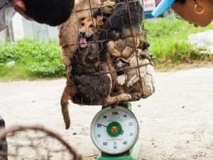 Thế giới - Lao động VN bị bắt ở Đài Loan vì chụp hình hành hạ chó