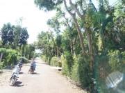 Tin tức trong ngày - Một người bị điện giật dính chặt vào thân cây