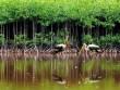 Khám phá nét lạ của du lịch sinh thái Trà Vinh