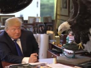 Thế giới - Video: Tỉ phú Donald Trump bị đại bàng mổ vào đầu