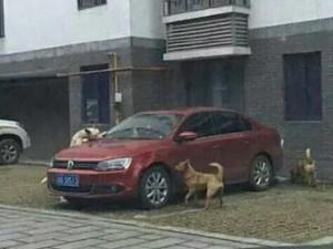 """Thế giới - TQ: Chó hoang """"trả thù"""" người sau khi bị đá"""