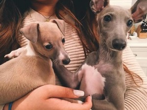 Nhà giàu Triều Tiên rộ mốt mua cún cưng để đọ đẳng cấp
