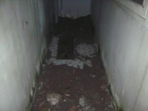 An ninh Xã hội - Thực nghiệm vụ cha giết con 5 tuổi, chôn xác trong nhà