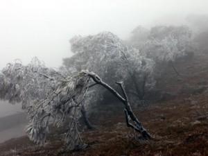 Tin tức trong ngày - Rét đậm bao phủ miền Bắc, Mẫu Sơn chuyển rét 3,3 độ C