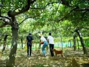 Du lịch - Lạc bước ở xứ sở táo xanh Ninh Thuận