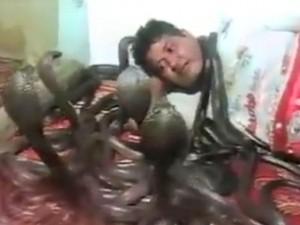 Video clip chuyện lạ - Clip: Người đàn ông ngủ cùng... bầy rắn hổ mang chúa