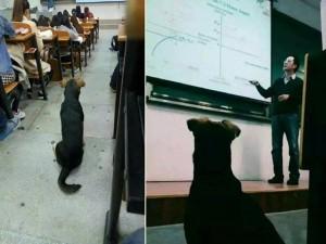 Bạn trẻ - Cuộc sống - Chú chó chăm học khiến nhiều sinh viên hổ thẹn