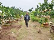 Tin tức Việt Nam - Ngắm vườn thập quả cực độc đáo của lão nông ở Thủ đô
