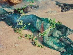 Tin tức trong ngày - Quảng Nam: Bác tin phát hiện nàng tiên cá nặng 48kg